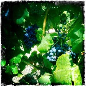Domaine-de-la-croix-raisins