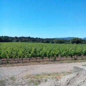 vignes Paquette