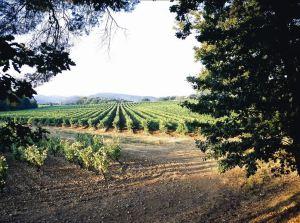 vignes sainte roseline