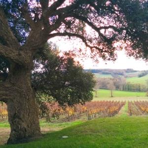 Vignes Armagnac Château de Mons