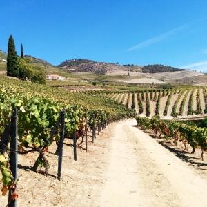 vignoble du Douro Foodwineandstyle